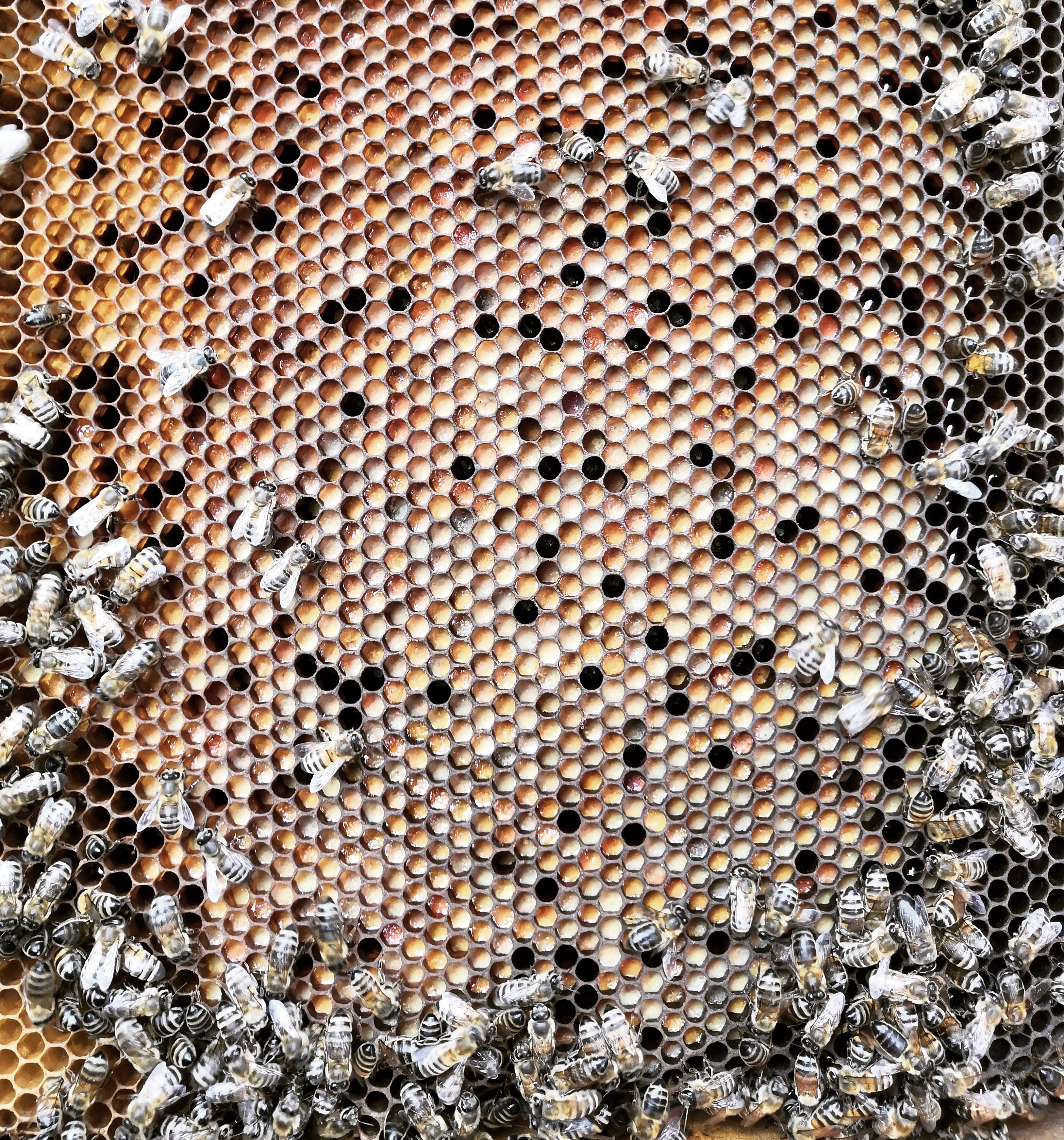 cadre de pollen