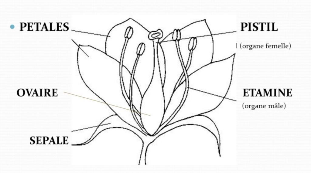 schéma de fleurs